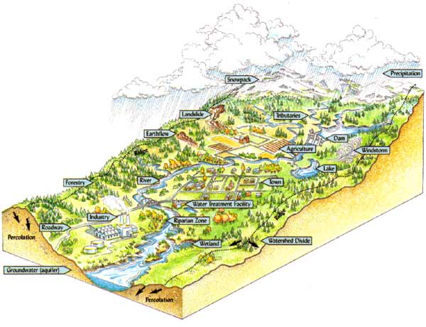 Watershed Tributary Diagram amrclearinghouse.org :...